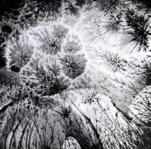Léa Barbazanges, Enregistrements photosensibles de cristaux, 2013, papier baryte réalisé par photosensibilité, 80 x  80 cm