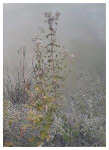 Raphaëlle Peria, Les herbiers, grattage sur photographie, 80 x 60 cm, 2019